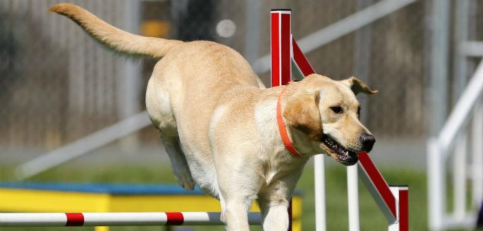 deporte para perros