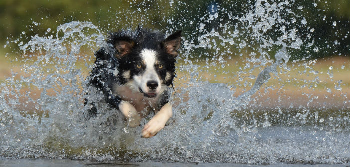 Consejos para proteger nuestra mascota del calor