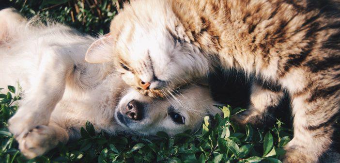 cuidado pelo mascotas