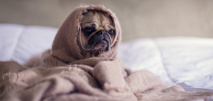 proteger a nuestras mascotas del frío