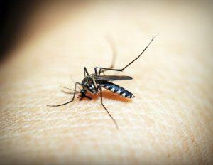 prevenir picaduras de mosquitos