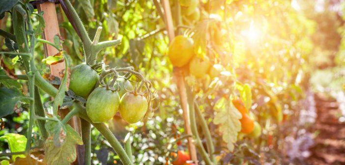 Diferencias entre biológico orgánico y ecológico