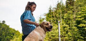 embarazo psicológico perros