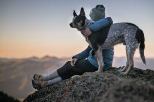 cómo cuidar de nuestra mascota en otoño