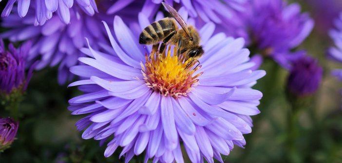 El alimento del mes: Cinco beneficios del polen de abeja