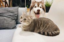 Coronavirus y mascotas