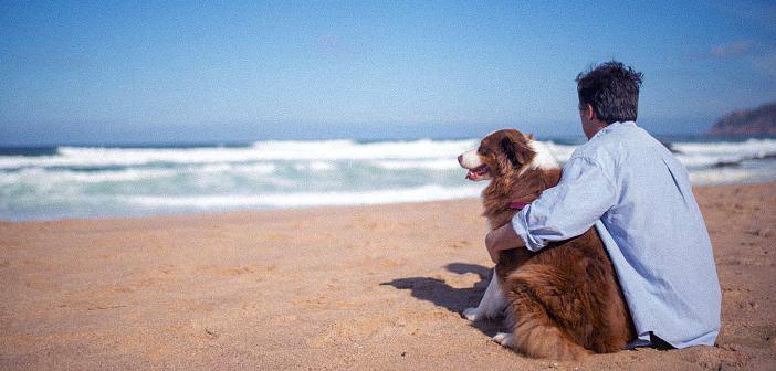 cómo proteger a tus mascotas del calor